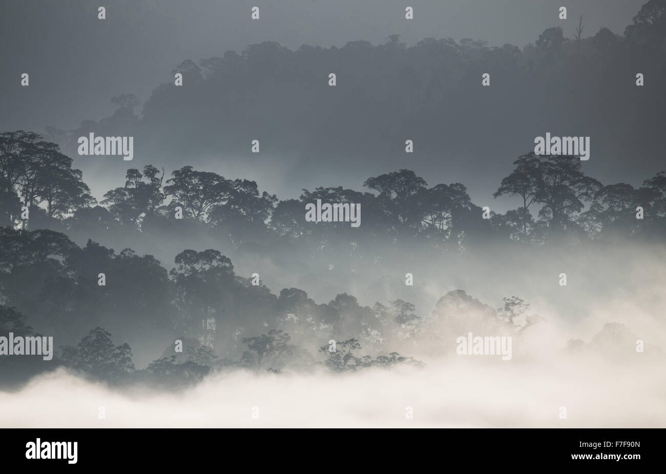 Mist rising at dawn over Danum Valley, Sabah, Malaysia Stock Photo