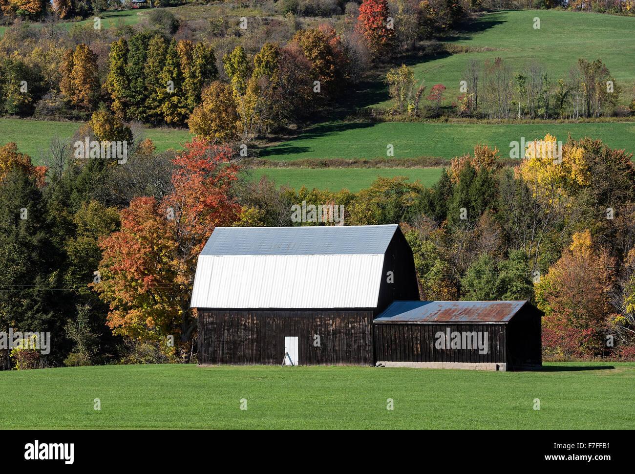 Rural barn with tin roof, Covington, New York, USA - Stock Image