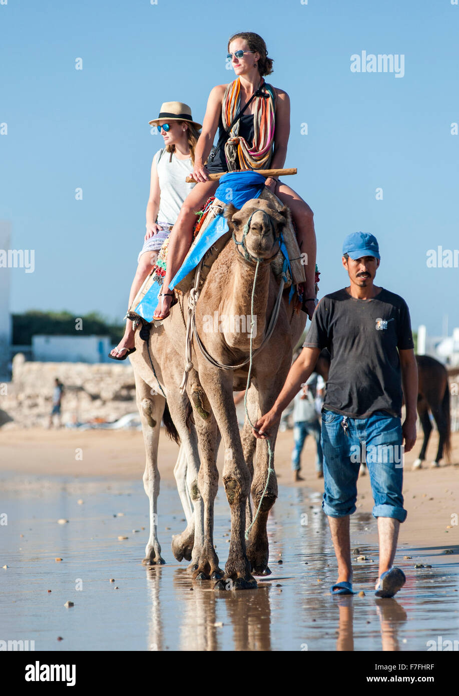 Tourists riding camels along the water's edge of Sidi Kaouki beach in Morocco. - Stock Image