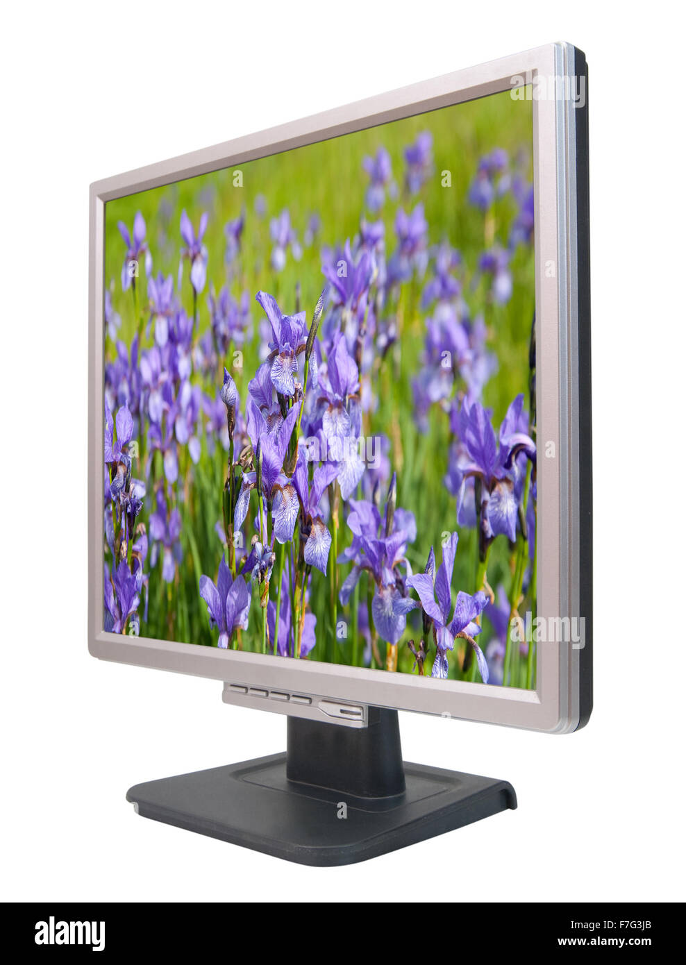 Lcd monitor with iris plant on wallpaper. On screen my photo - Stock Image