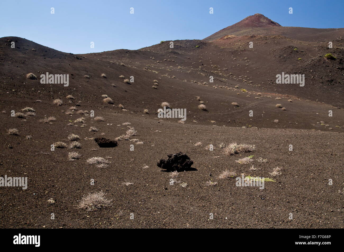 Stark volcanic landscape in the Timanfaya National Park,  central Lanzarote, with early colonising plants. - Stock Image