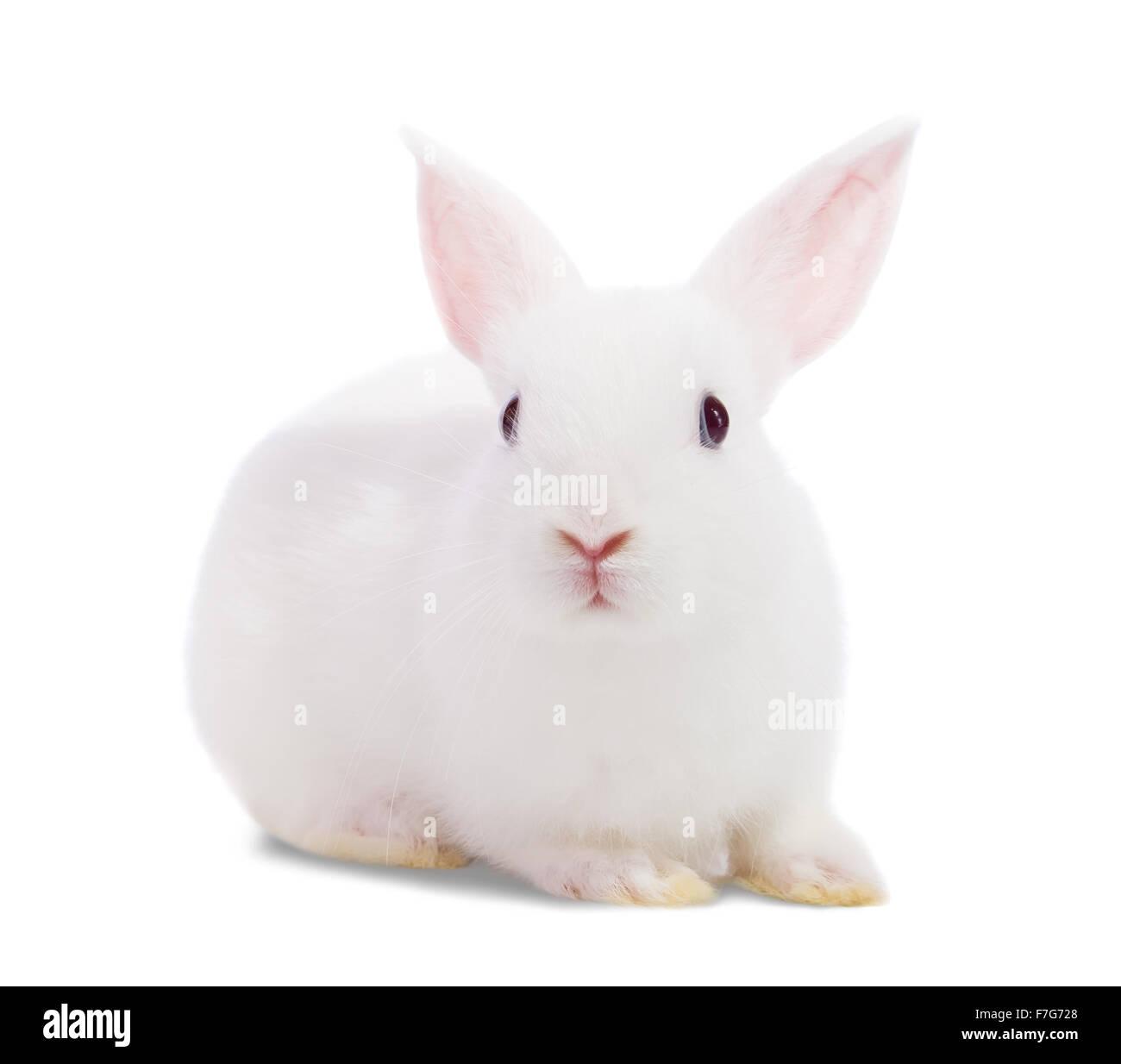 Little white rabbit. Isolated on white background - Stock Image