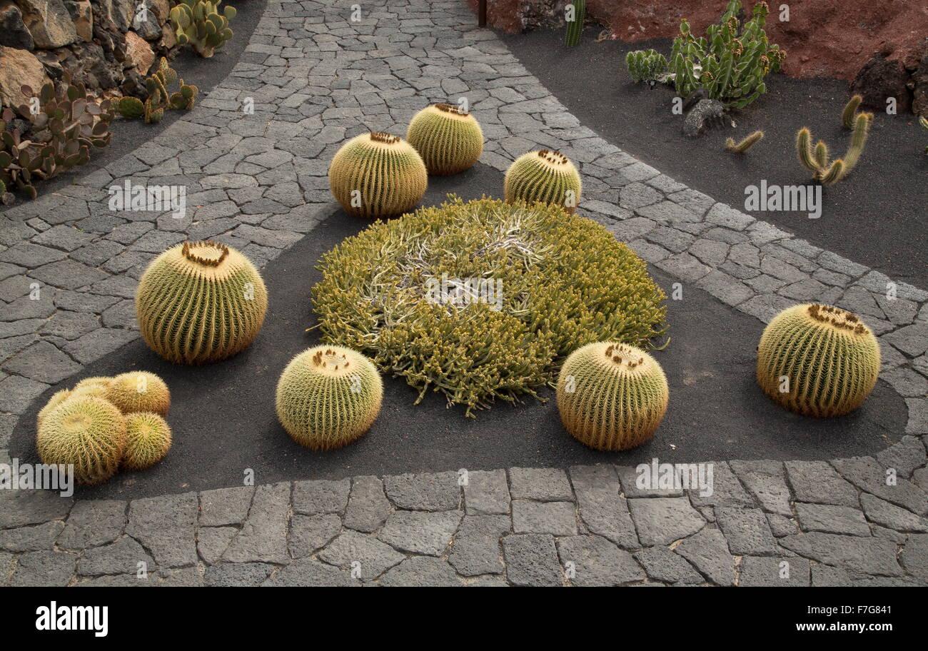 Garden Design Using Barrel Cacti Etc At The Cactus Garden Stock