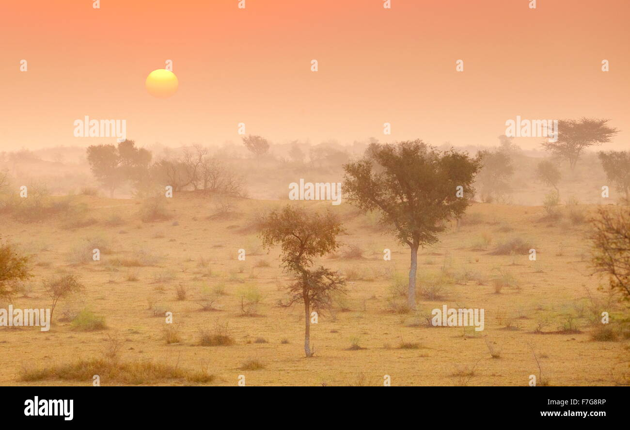 Sunrise in Thar desert near Jaisalmer, Rajasthan, India - Stock Image