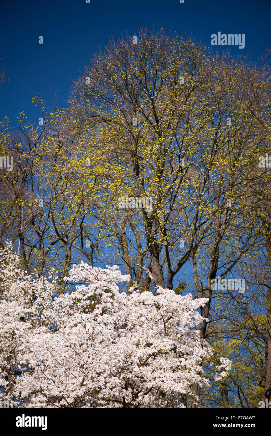 With Polarising filter, different effects on two images in serie, one with and one without circular polarising filter... - Stock Image