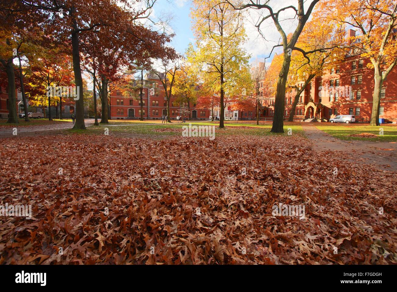 Autumn fallen leaves in Harvard Yard at Harvard University in Cambridge, Massachusetts - Stock Image