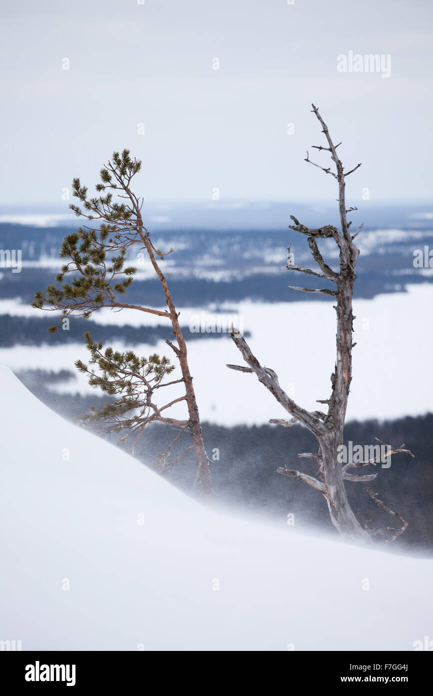 White snow and rocks on arctic hill - Stock Image