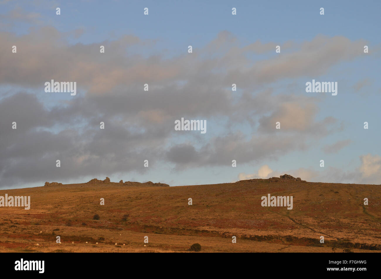 View to Great Staple Tor and Middle Staple Tor over Whitchurch Common in winter, from Pork Hill, Dartmoor National - Stock Image