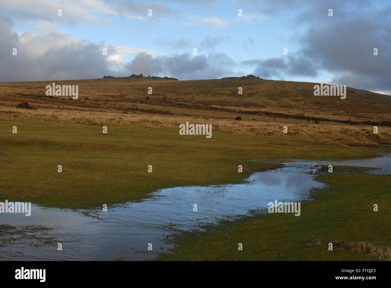 View to Great Staple Tor and Middle Staple Tor from Pork Hill across Whitchurch Common, Dartmoor National PArk, - Stock Image