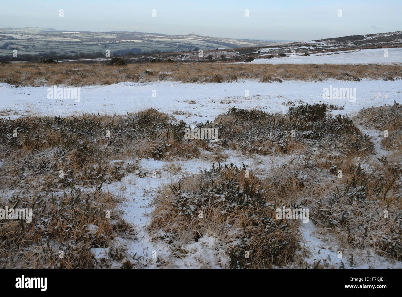 Whitchurch Common with snow in winter, Dartmoor National Park, Devon, England - Stock Image