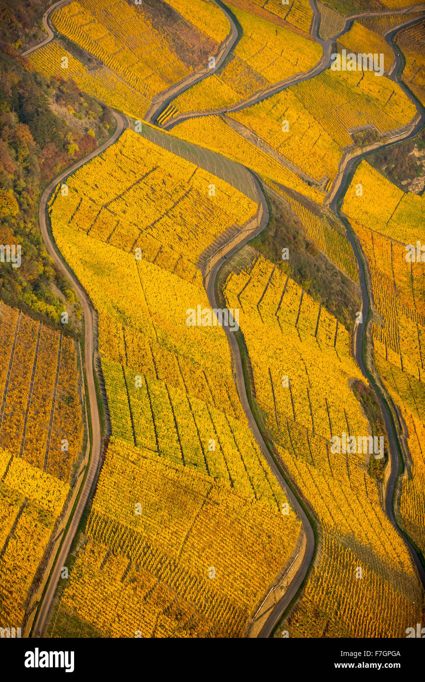 left bank of the Rhine Rhine valley with vineyards and autumn foliage, steep vineyards, walks in the vineyards, - Stock Image