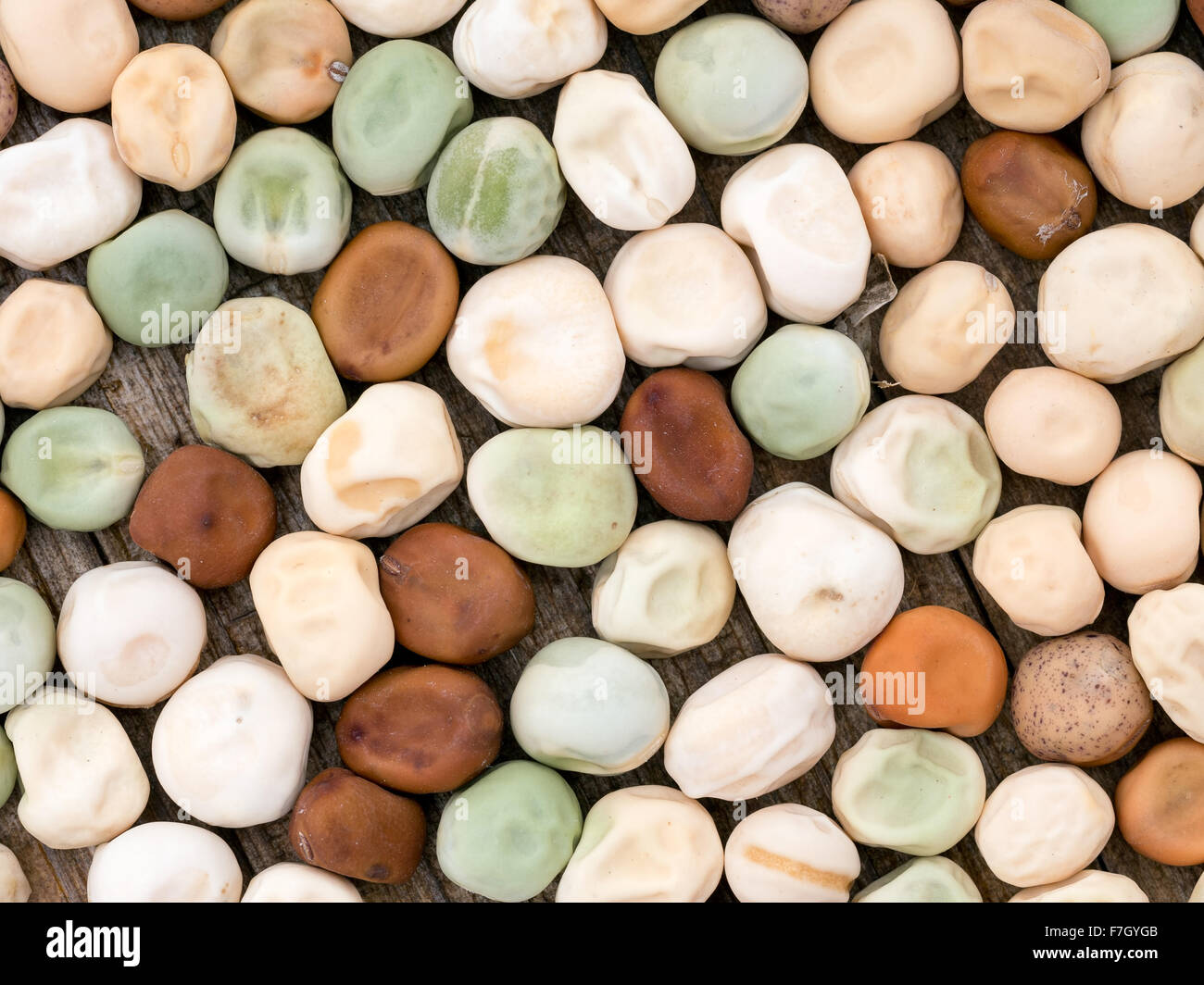 Gardening etc. Closeup of assorted home-saved peas for sowing in spring. - Stock Image