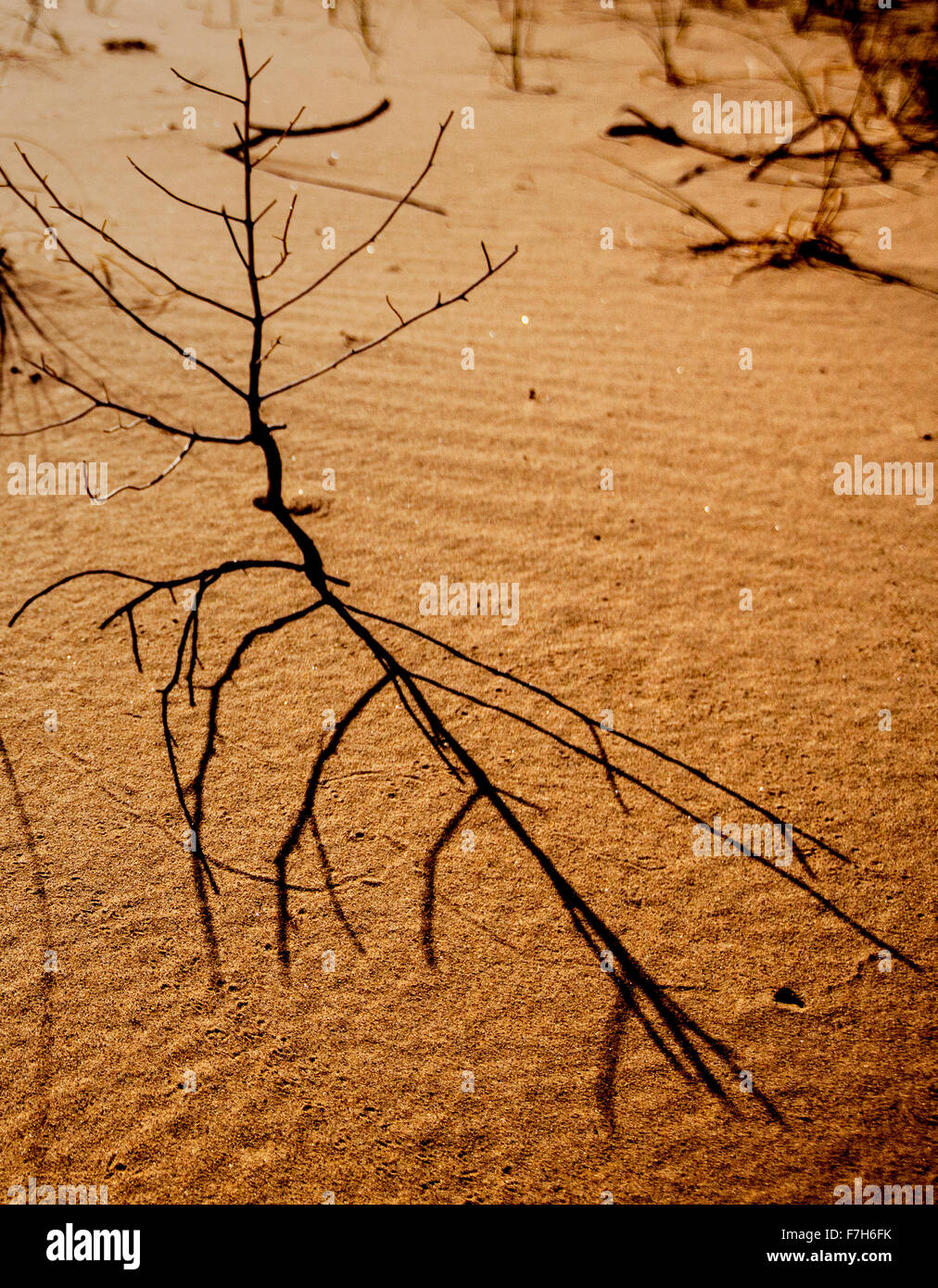 Shadows stretch across the dunes - Stock Image