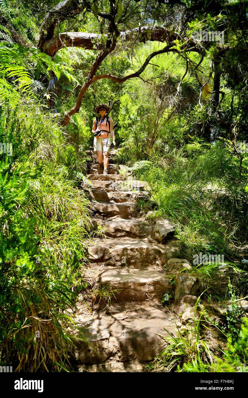 Levada do Risco, popular walking path in Rabacal, Madeira Island, Portugal - Stock Image
