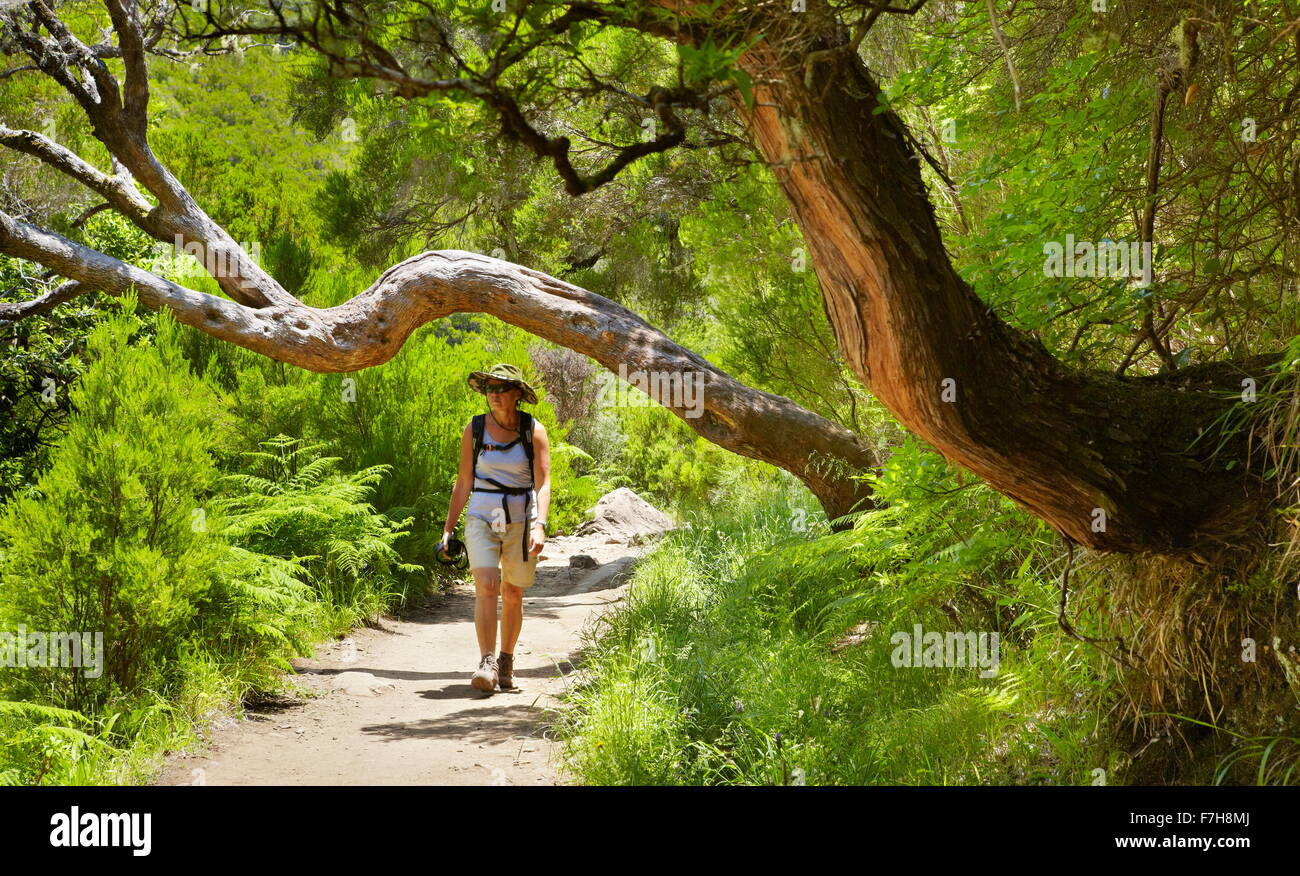Tourist on the trail on Levada do Risco, Rabacal, Madeira Island, Portugal - Stock Image