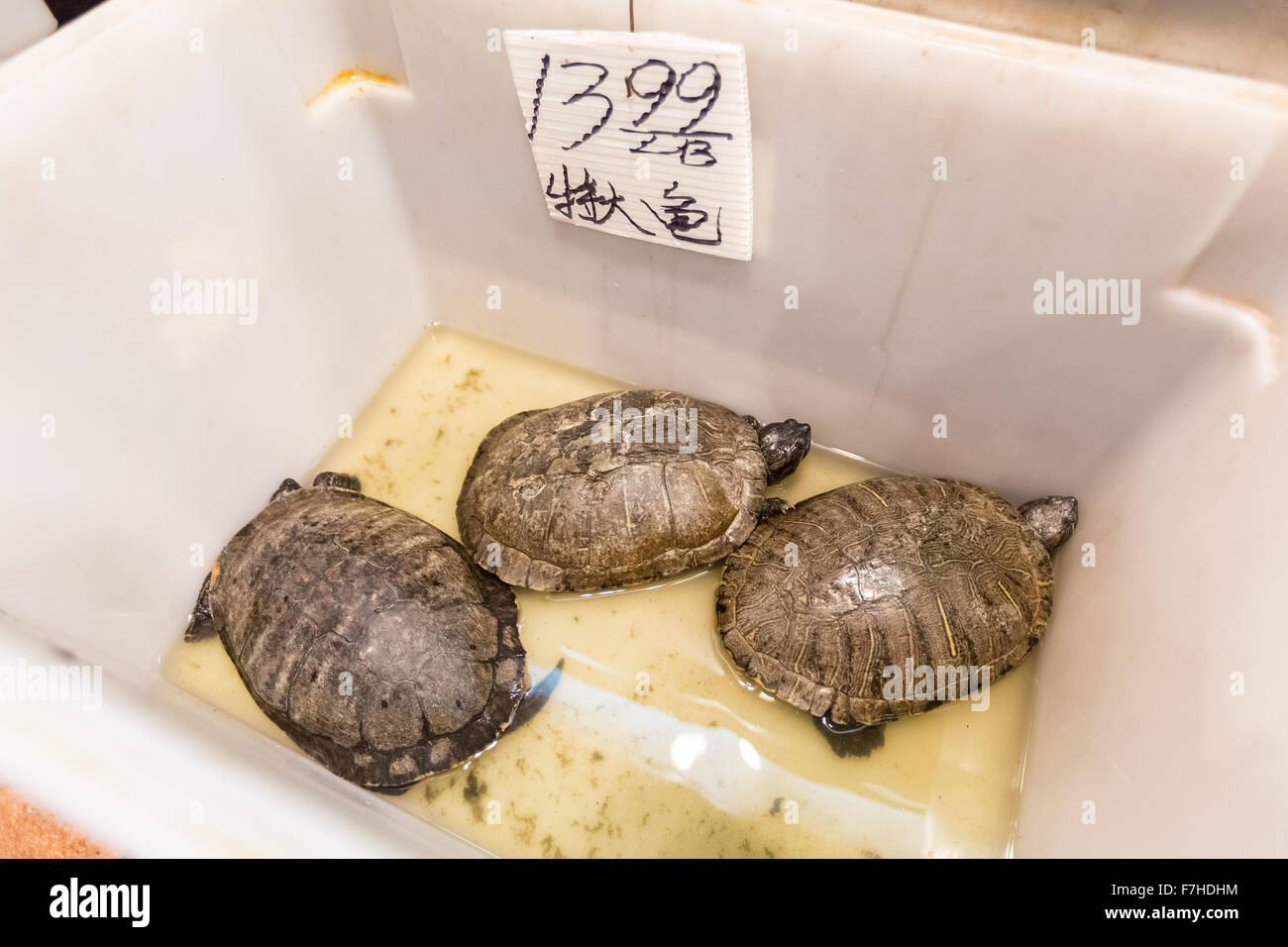 Turtles sold for food at Chinatown, San Francisco, California, United States of America, North America - Stock Image