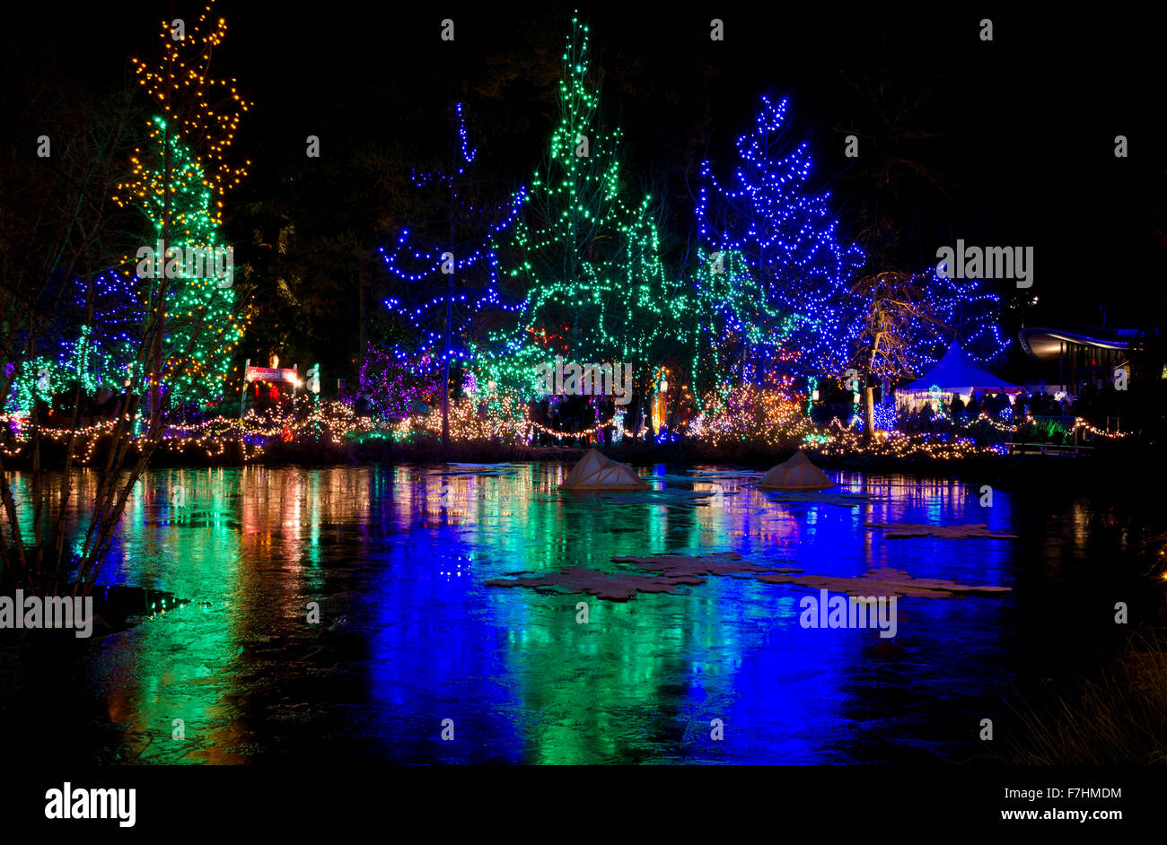 Beautiful Christmas and holiday light display at night at van Dusen botanical garden in Vancouver - Stock Image