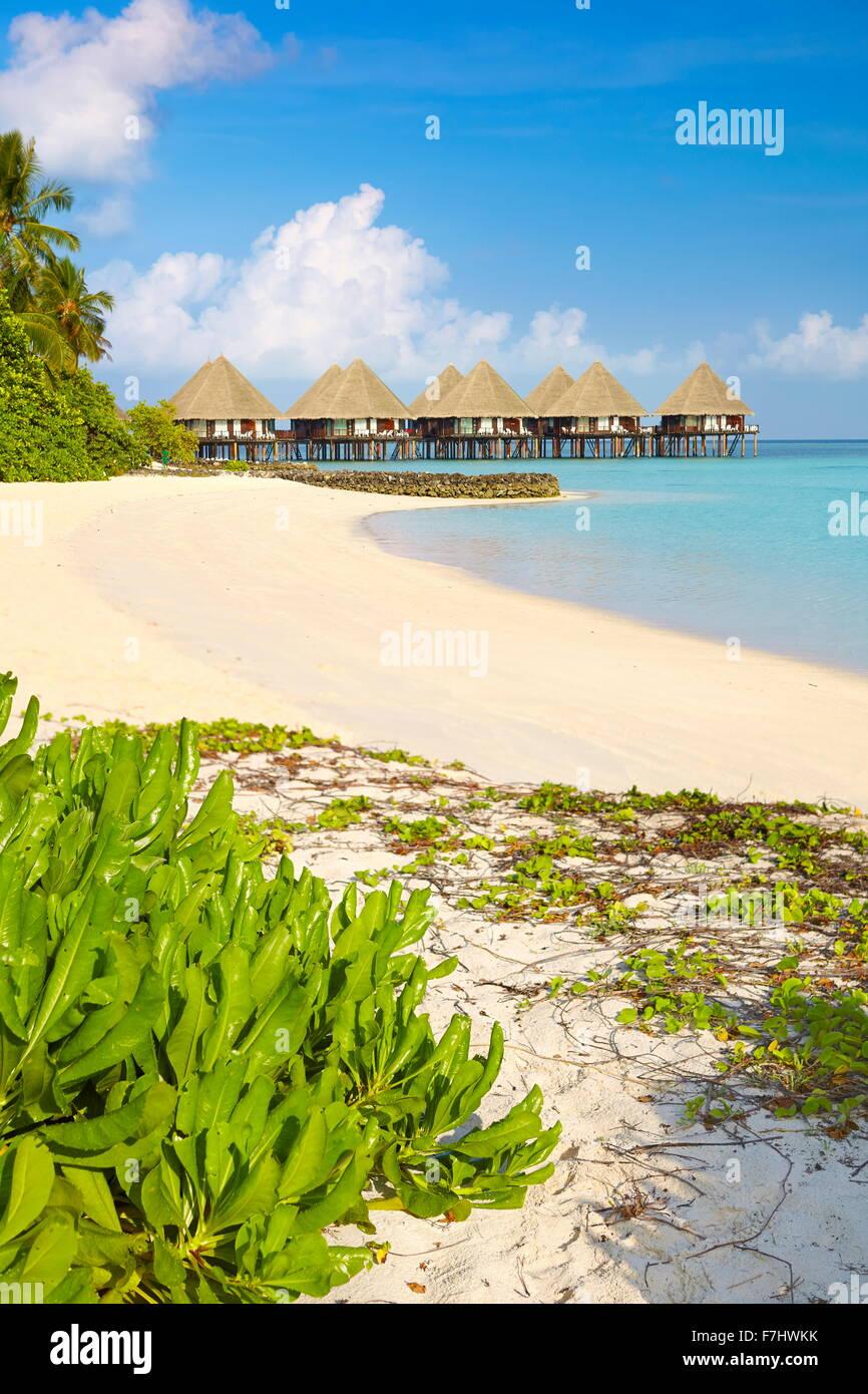 Tropical beach, Maldives Island, Ari Atoll - Stock Image