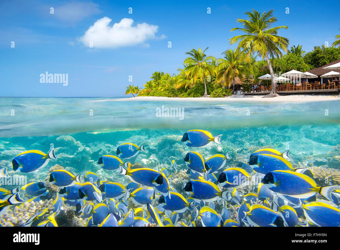Maldives Island - underwater view with shoal of fish and reef - Stock Image