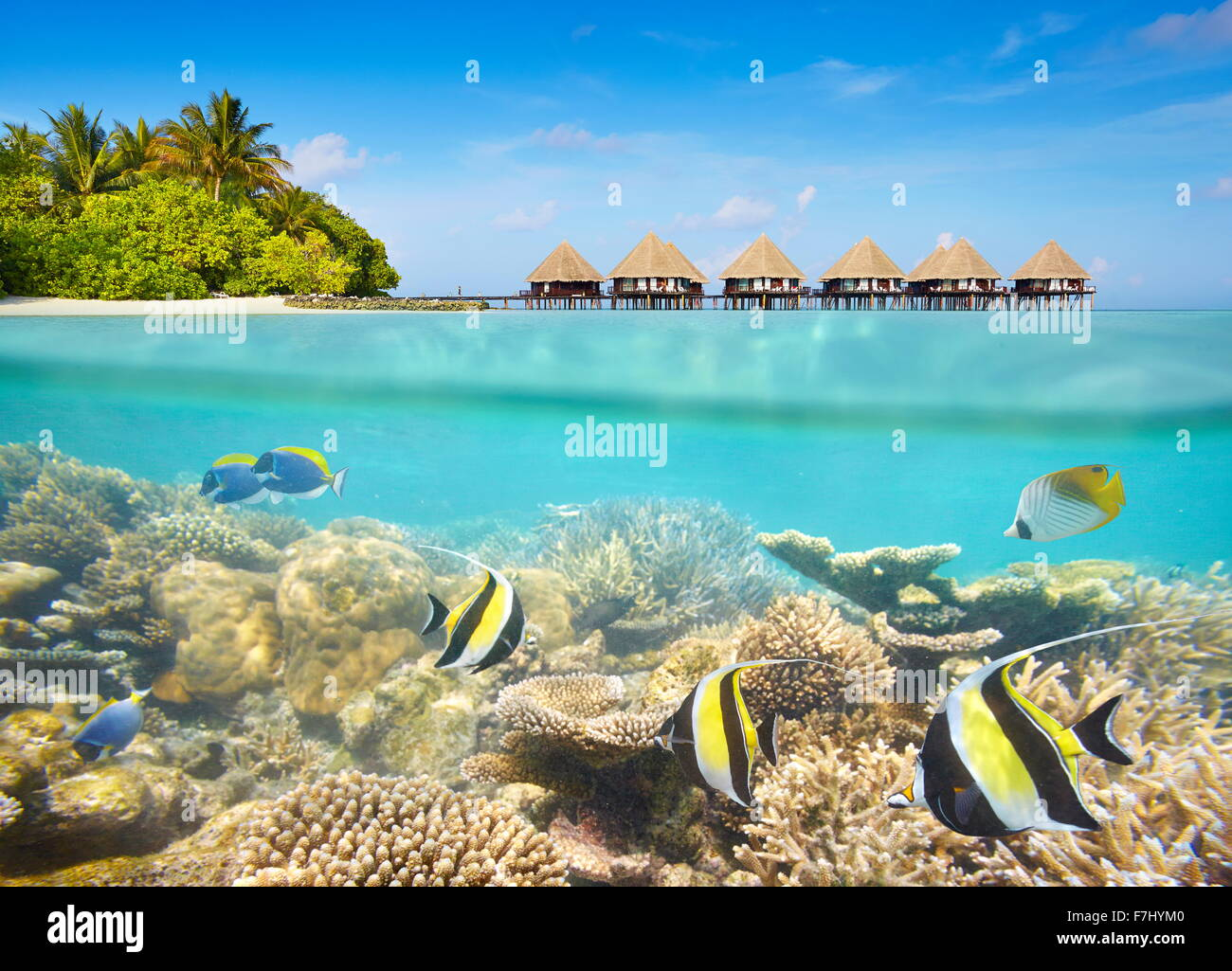 Tropical underwater scenery at Maledives Island - Stock Image
