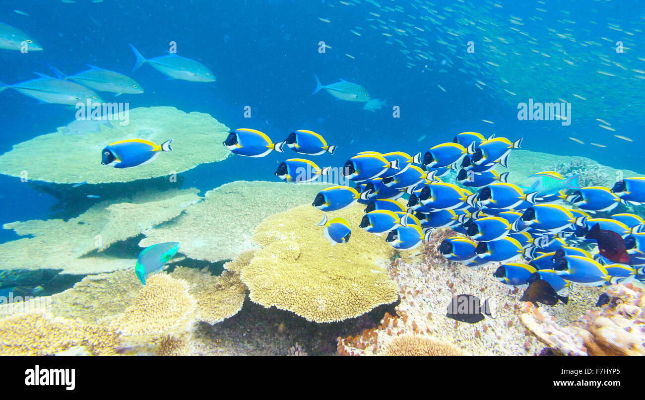 Underwater view with fish, Maldives, Indian Ocean - Stock Image