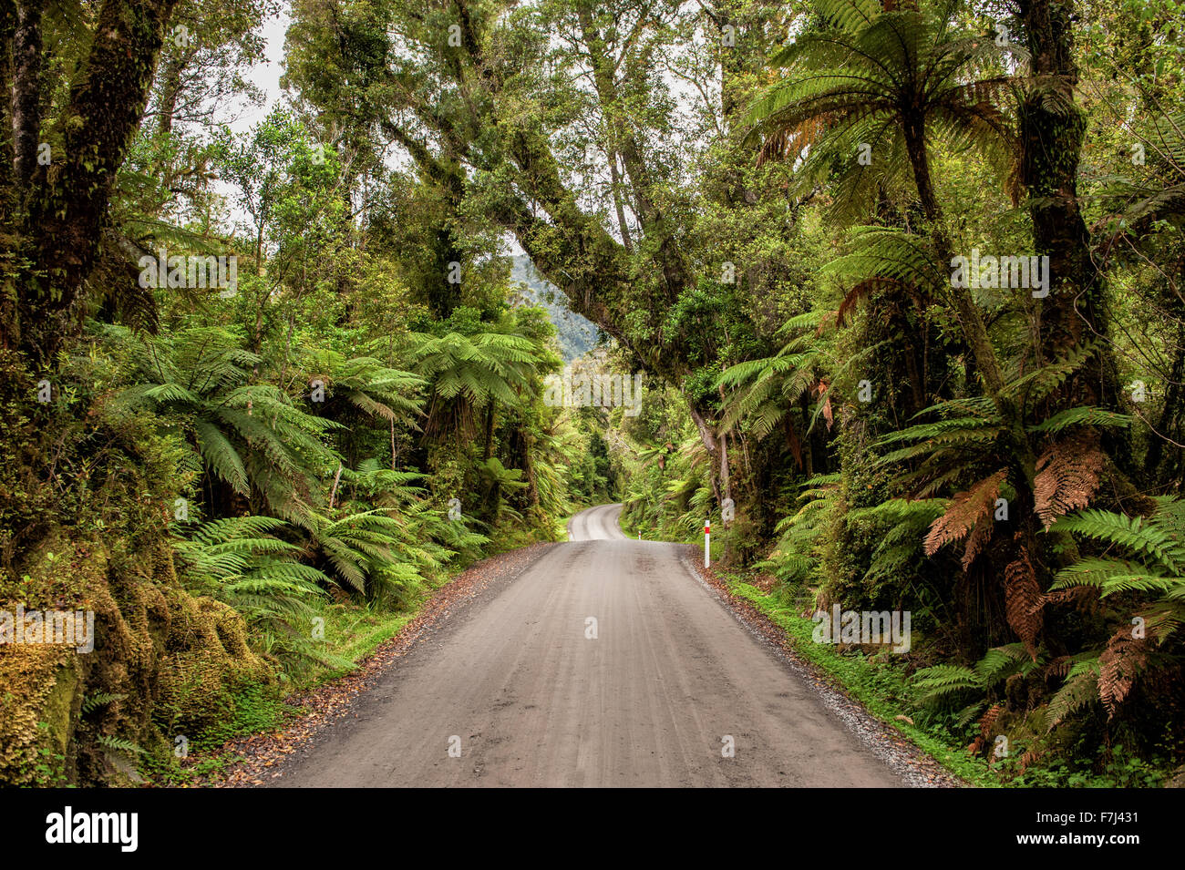 Winding gravel road through the rain forest in Glacier Country, West Coast, South Island, New Zealand - Stock Image