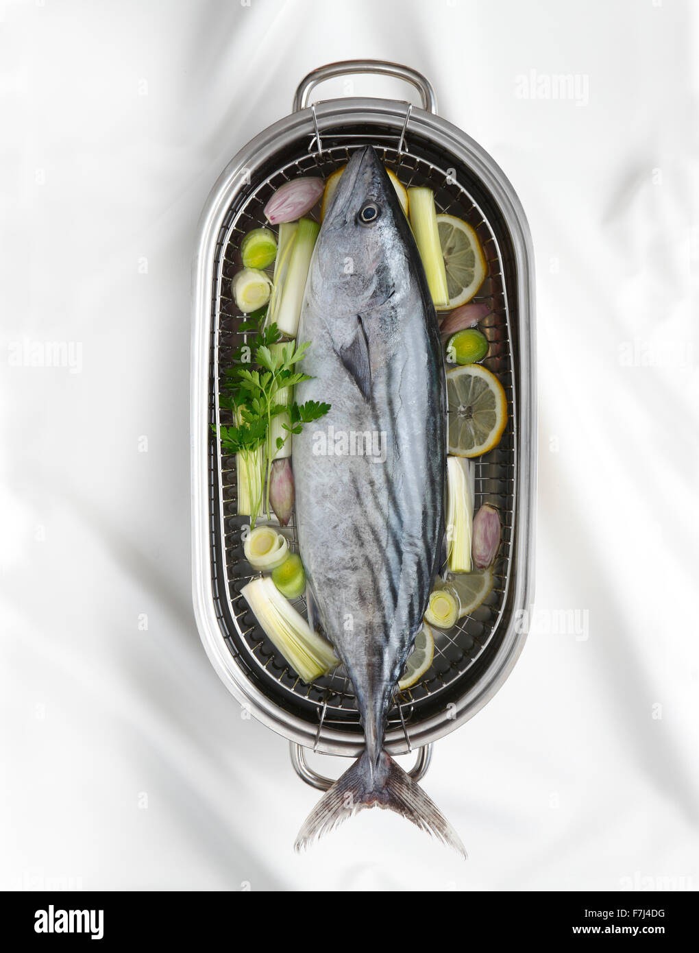 An Atlantic bonito in a cooking pot - Stock Image