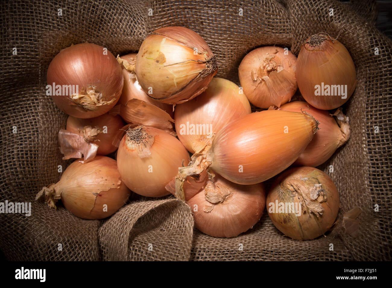 burlap sack of yellow onions - Stock Image
