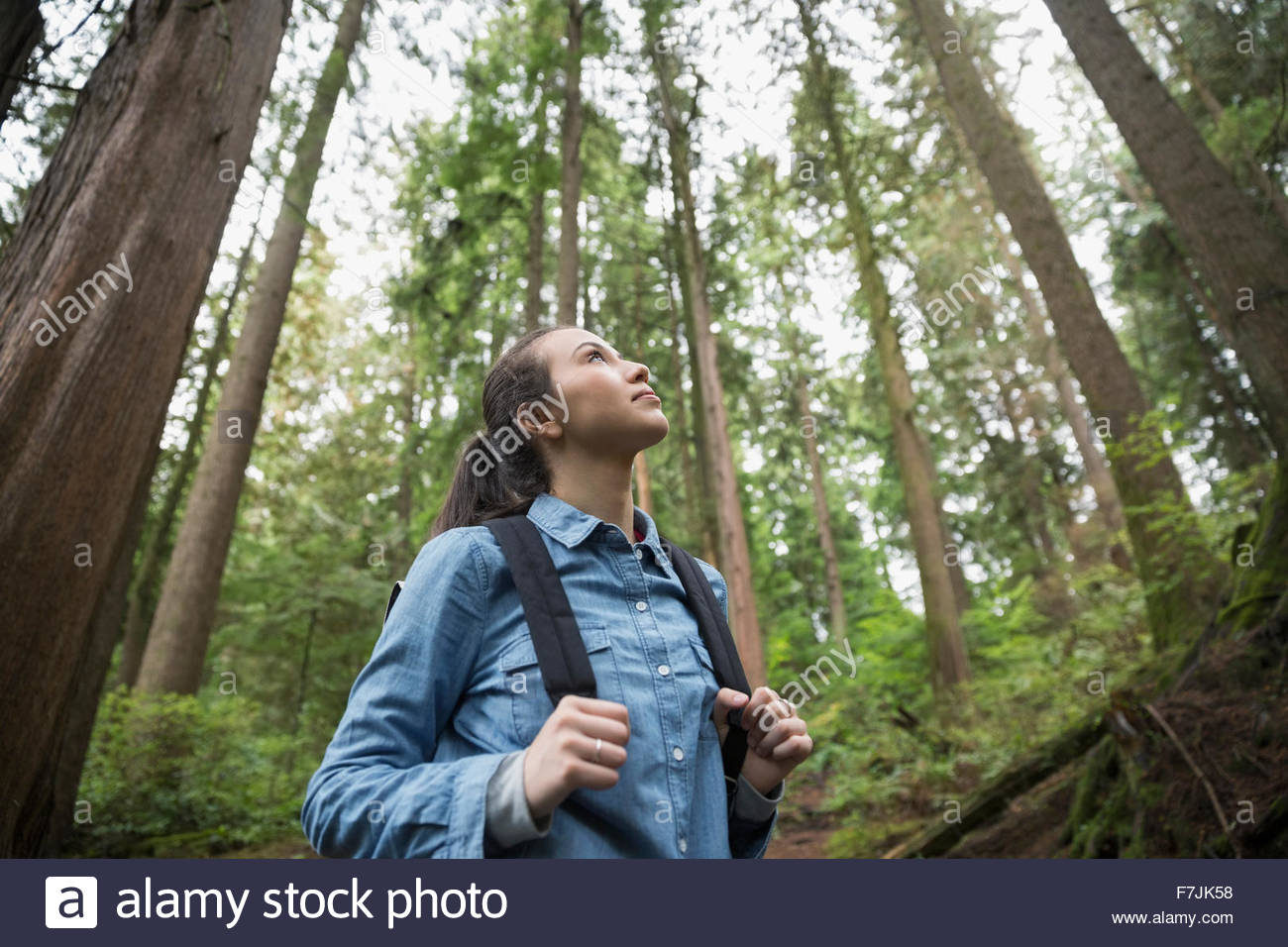Pensive young woman hiking looking up trees woods Stock Photo