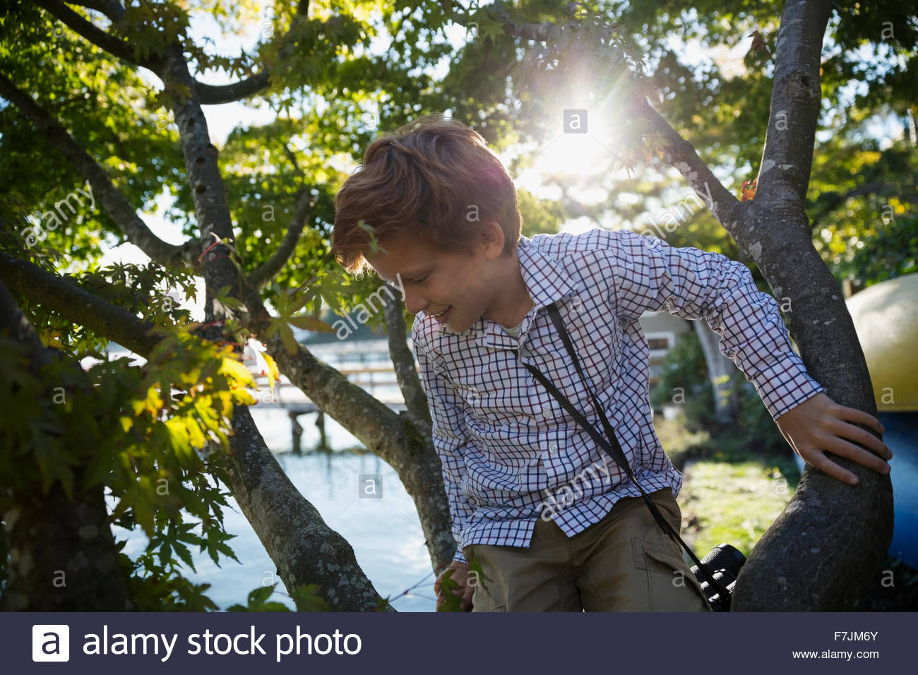 Boy climbing tree - Stock Image