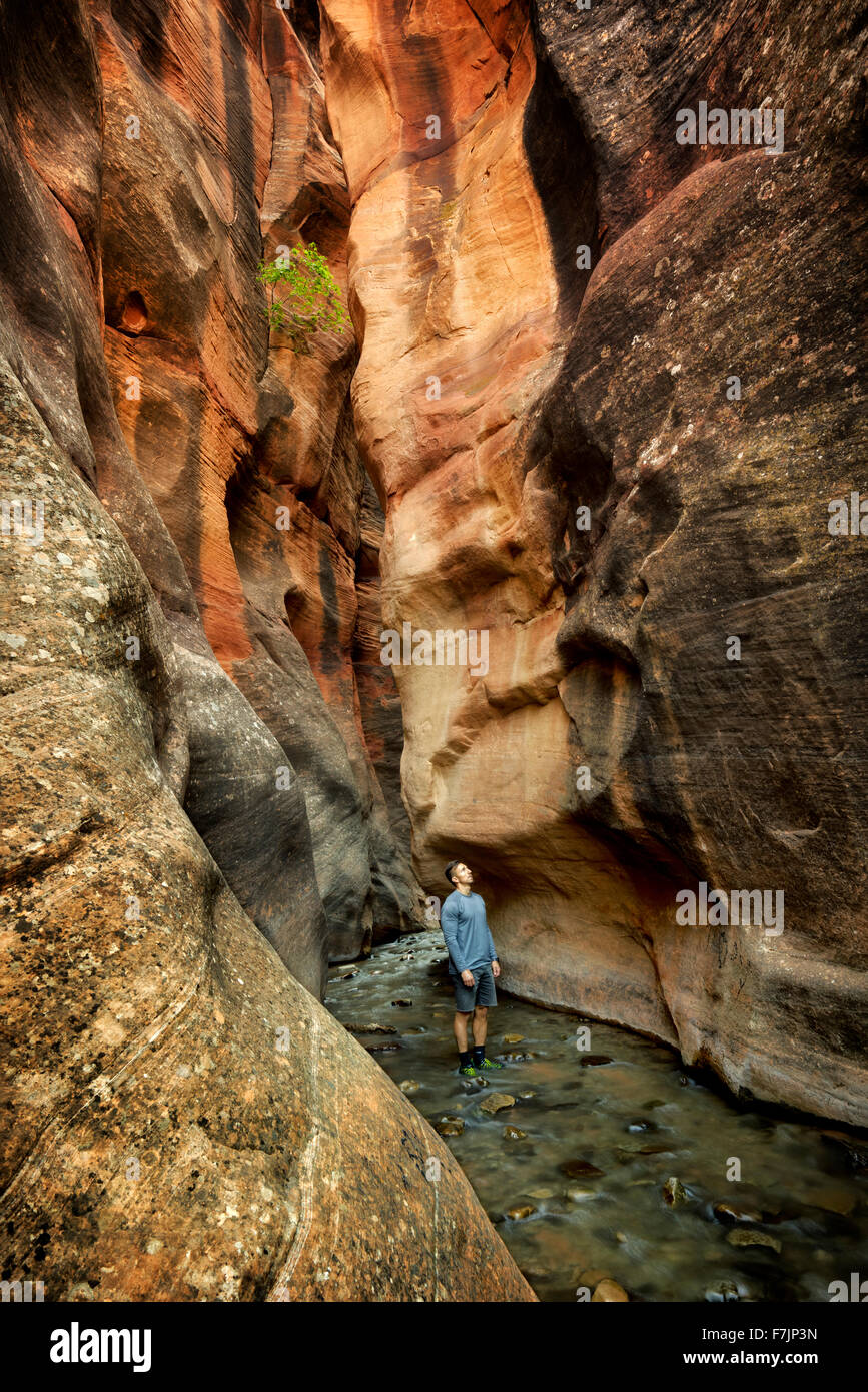 Kanarra Creek Canyon with hiker. Utah. Dixie National Forest - Stock Image