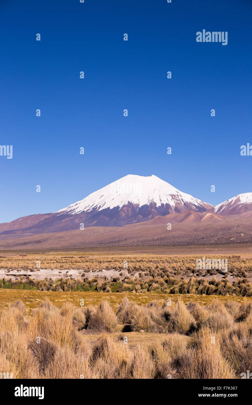 Parinacota volcano. High Andean landscape in the Andes. High Andean tundra landscape in the mountains of the Andes. - Stock Image
