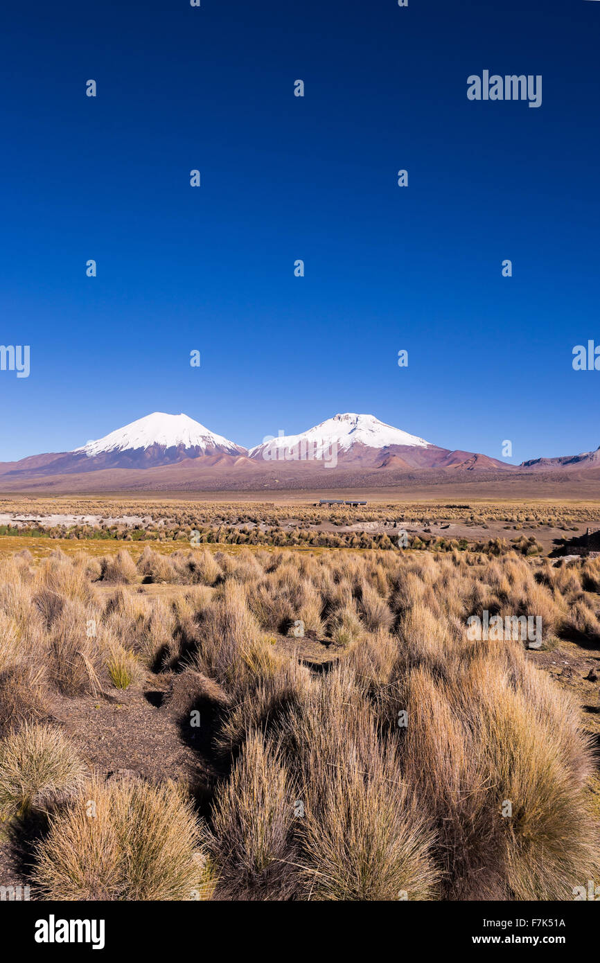 Parinacota and Pomerade volcanos. High Andean landscape in the Andes. High Andean tundra landscape in the mountains - Stock Image