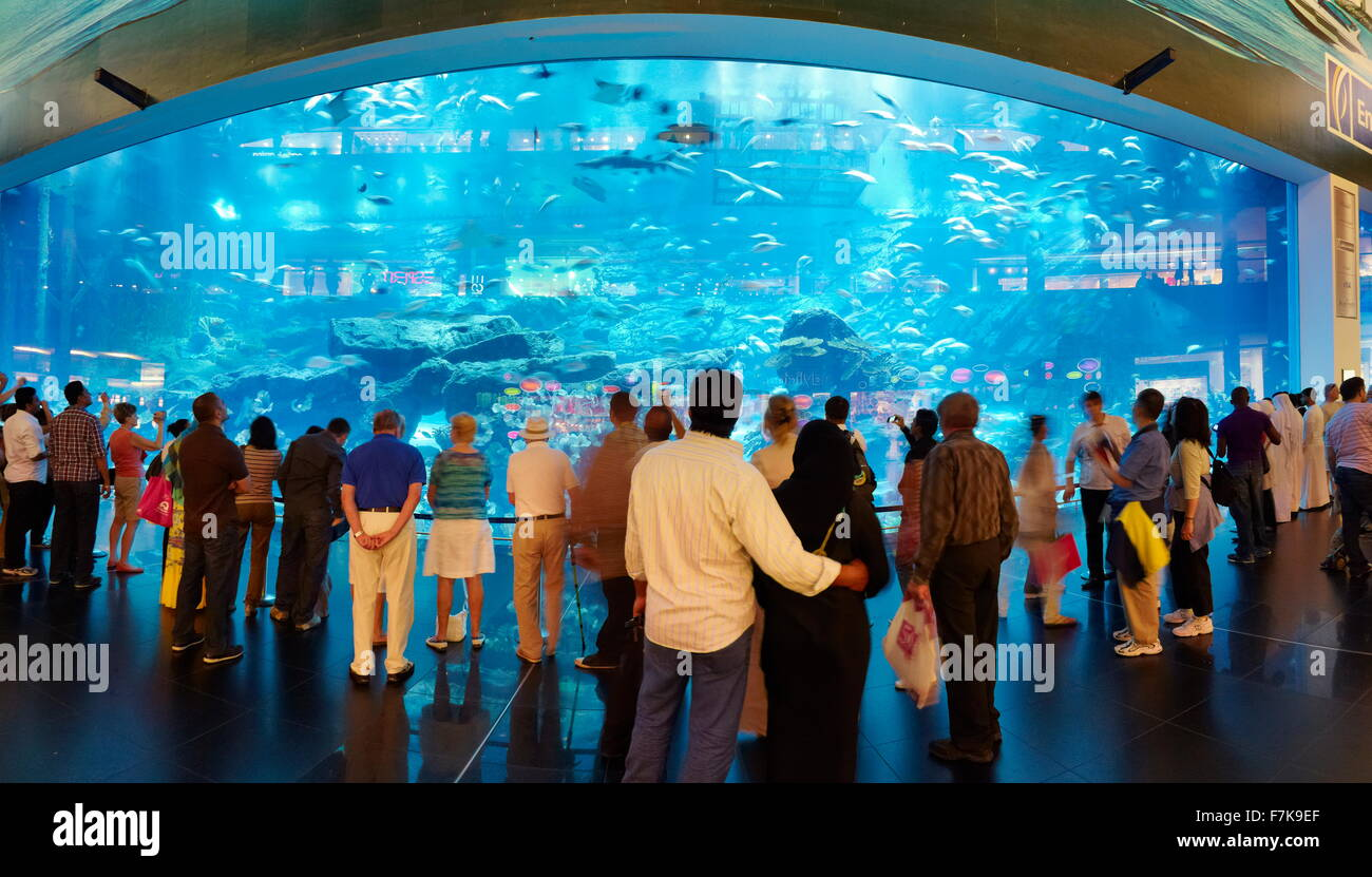 The Dubai Mall Aquarium, Dubai, United Arab Emirates, Middle East Stock Photo