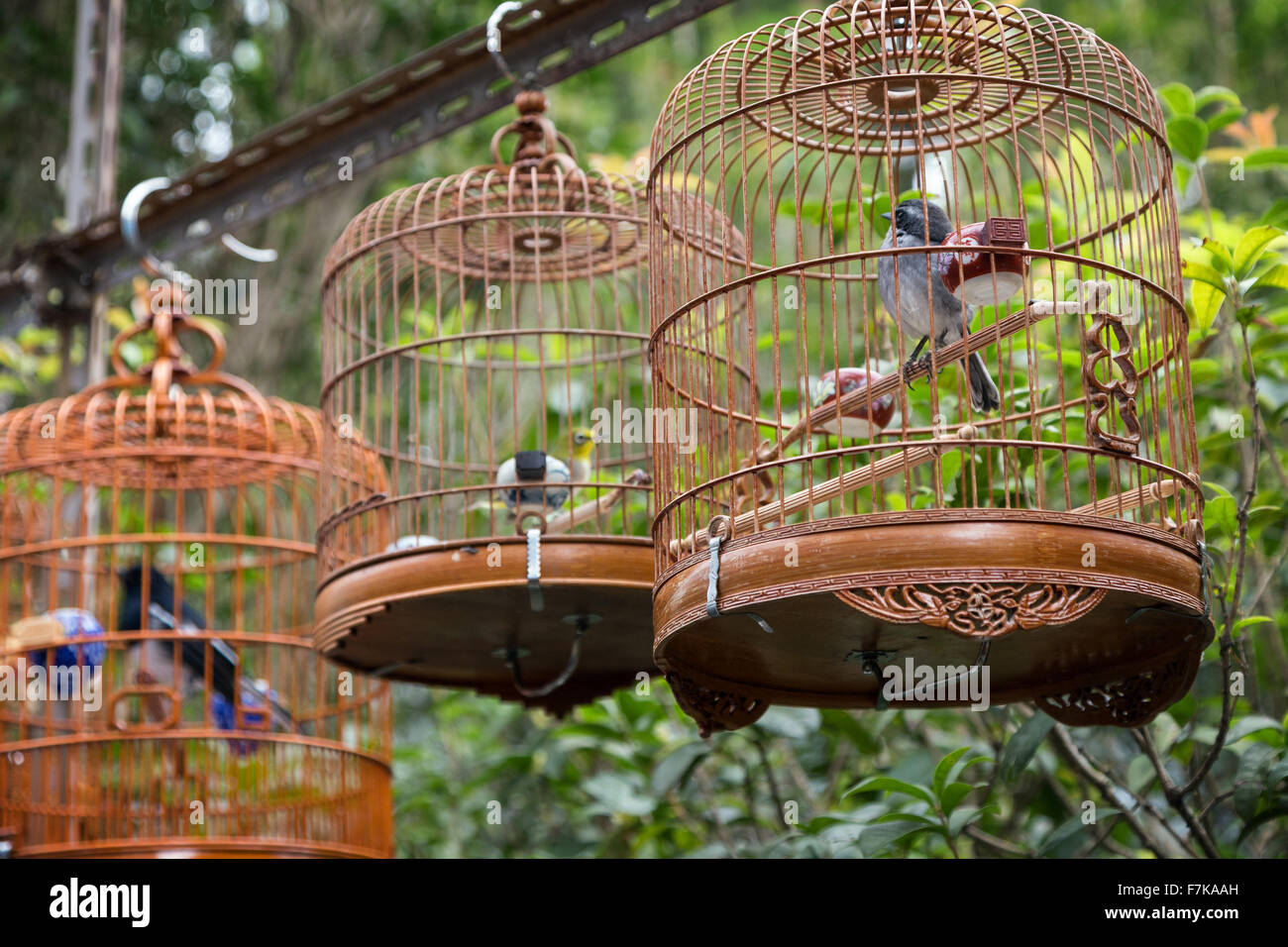 Birds in cages at the Bird Garden/Street/Market in Hong Kong, China ...