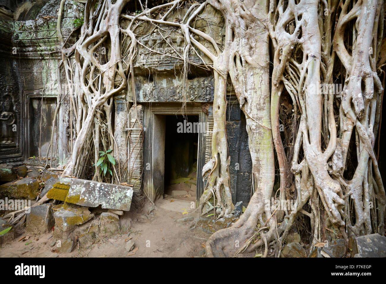 Ta Prohm Temple, Angkor, Cambodia, Asia - Stock Image