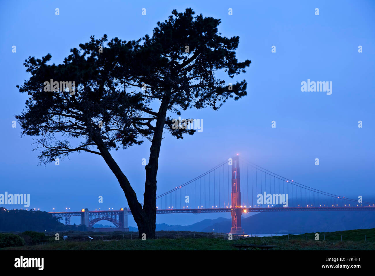 Tree and Golden Gate Bridge in fog, San Francisco, California USA - Stock Image