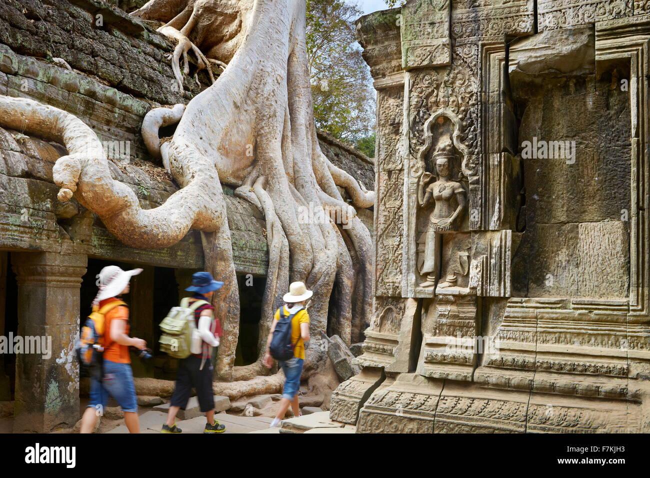 Ta Prohm Temple near Angkor Wat, Angkor, Siem Reap, Cambodia, Asia - Stock Image