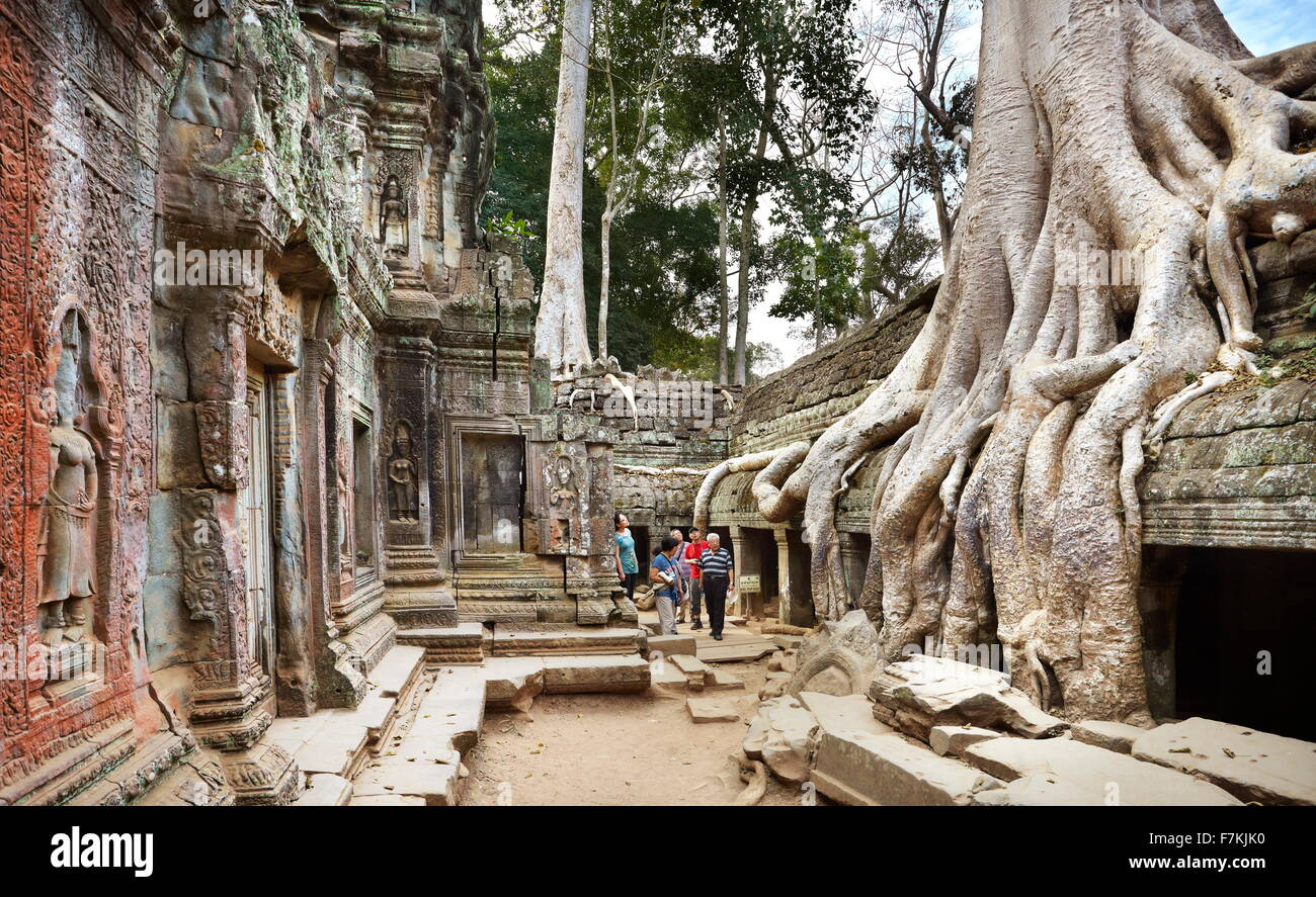 Roots of a giant tree overgrowing ruins of the Ta Prohm Temple, Angkor, Cambodia, Asia - Stock Image