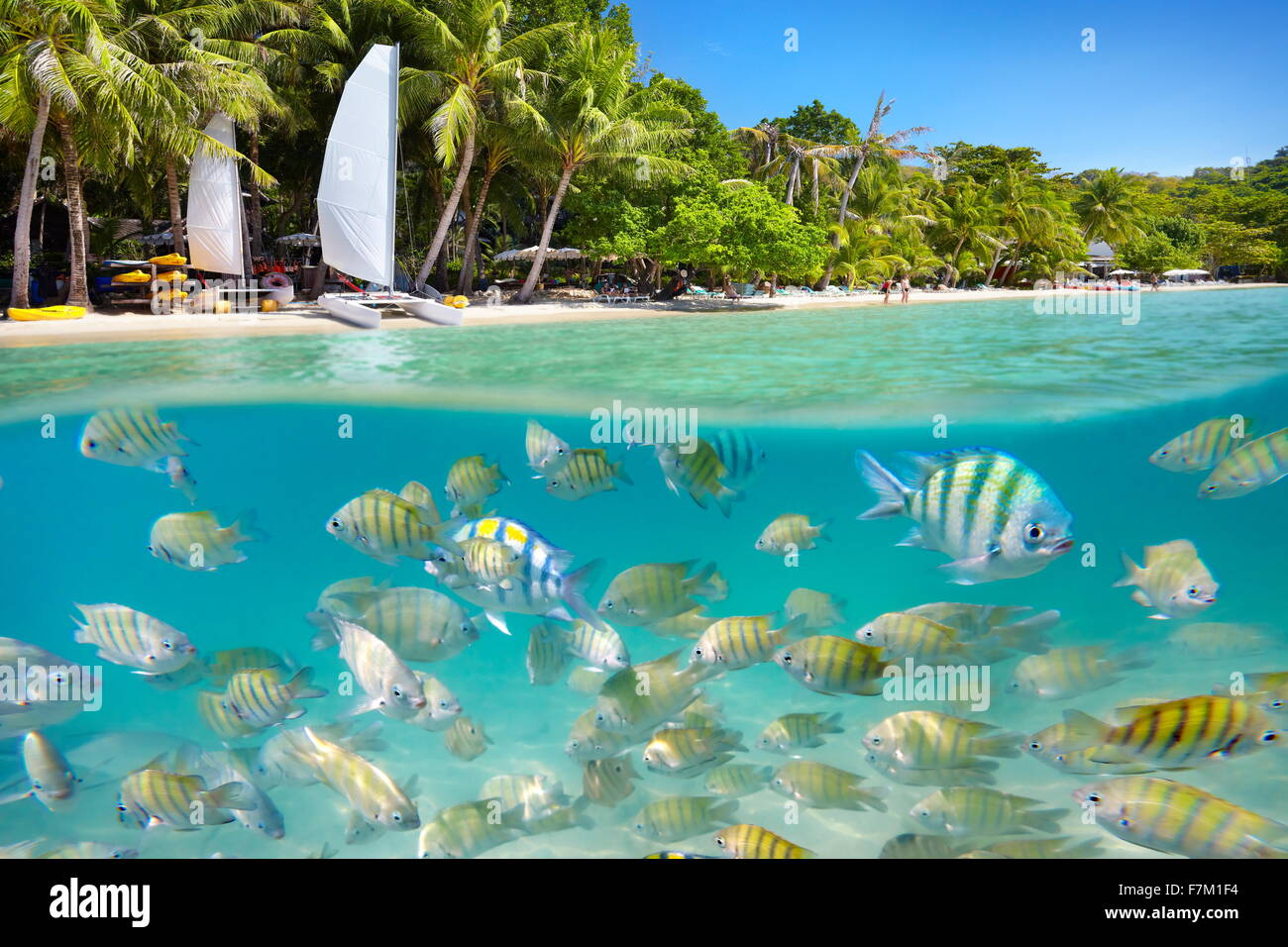 Thailand - tropical beach and underwater sea view with fishes at Ko Samet Island, Thailand, Asia - Stock Image