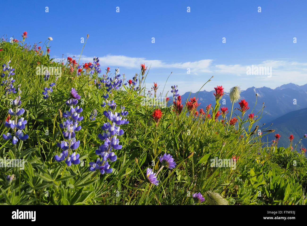 Idaho Peak, Selkirk Mountains, British Columbia, Canada - Stock Image