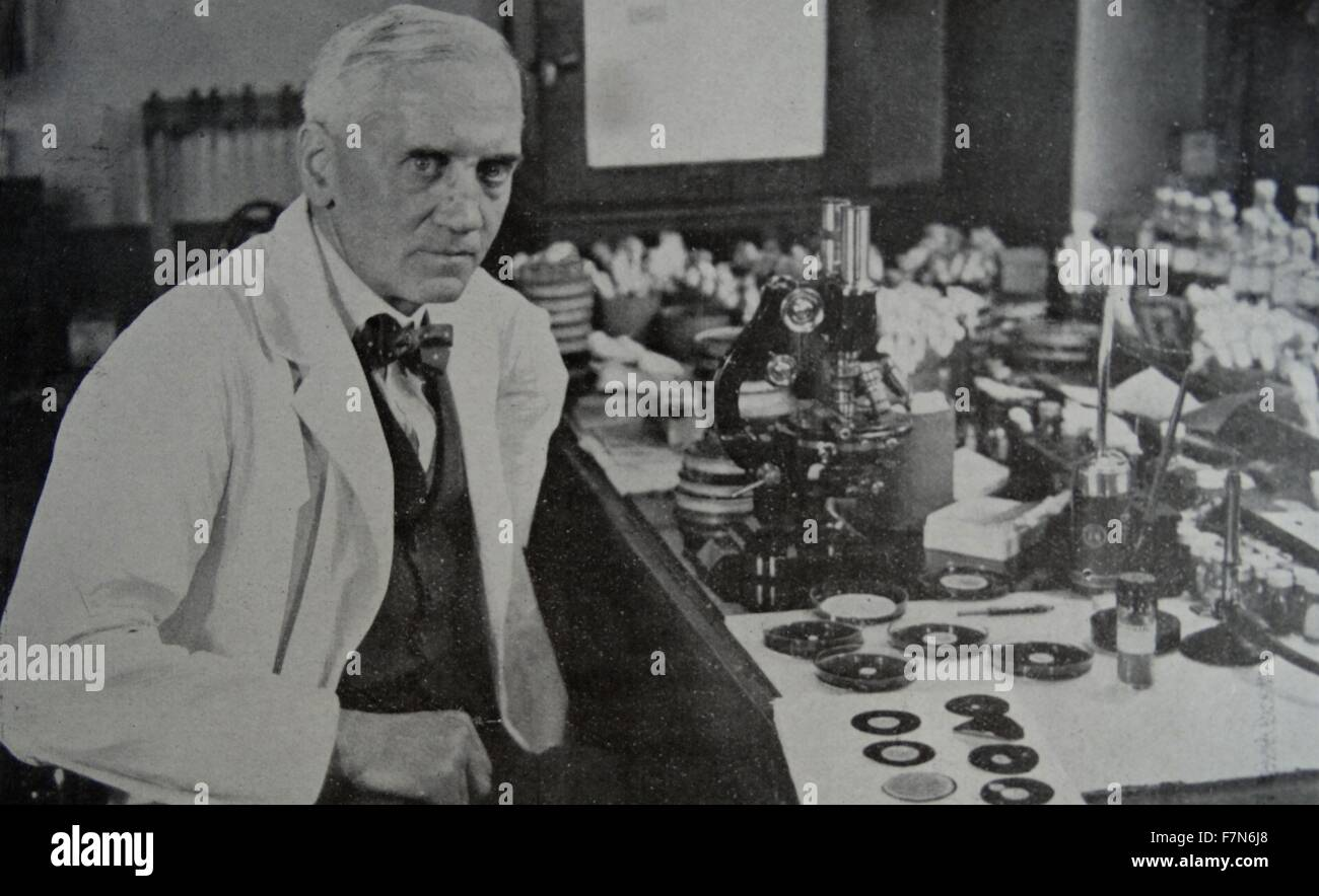 Sir Alexander Fleming (1881-1955) who discovered penicillin, at work in his laboratory in St. Mary's Hospital, - Stock Image