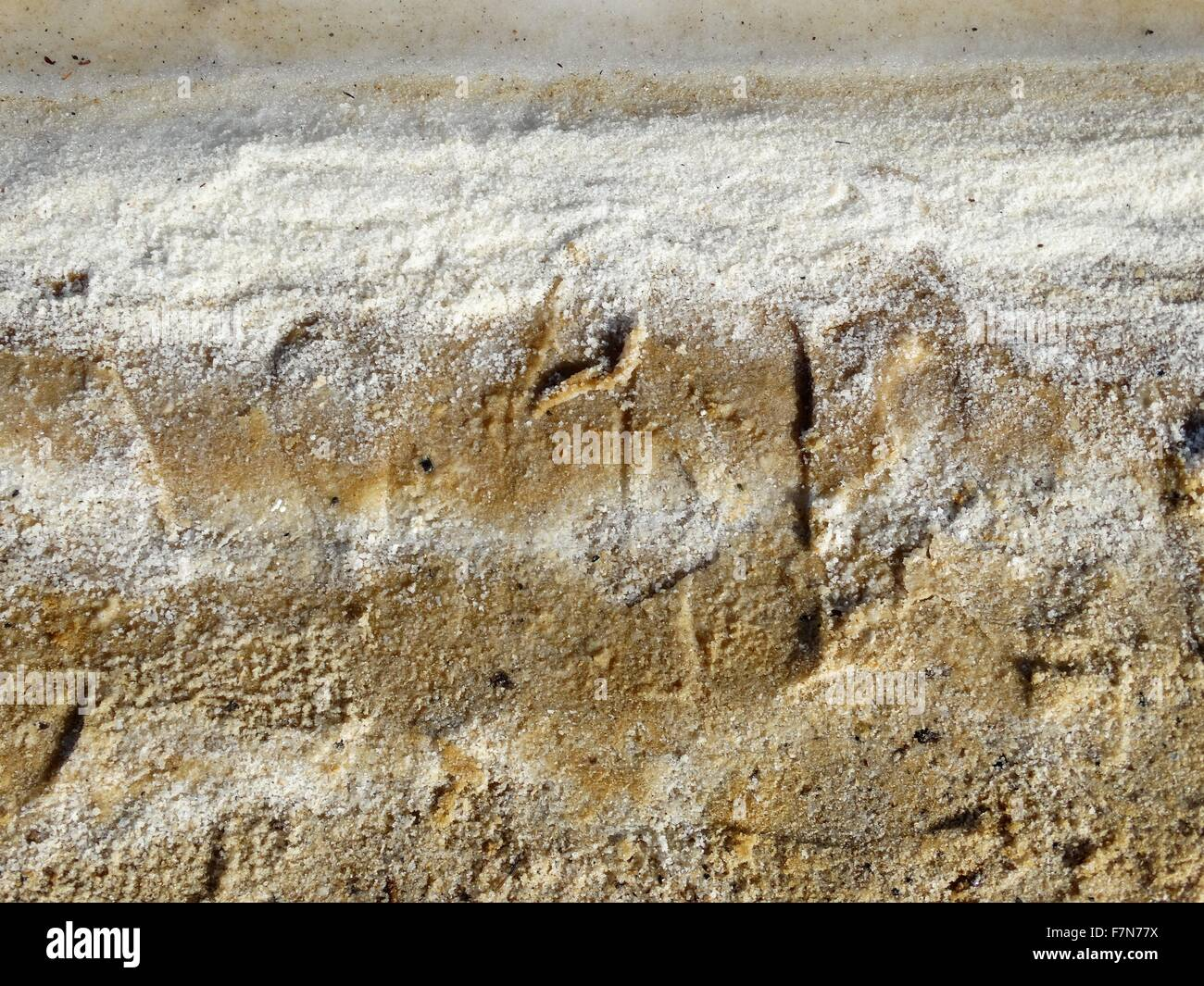 Dead sea salt deposits; Israel 2014 - Stock Image