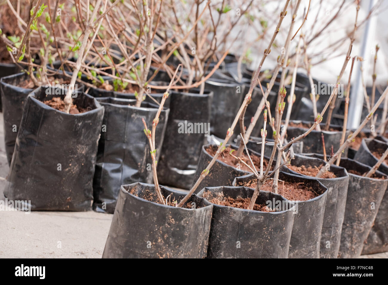 bargain sale of  trees and bushs outdoor - Stock Image
