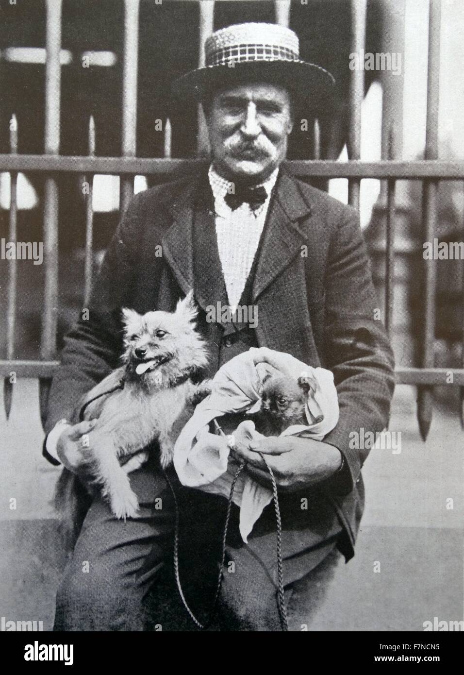 man with a dogs, Belgium 1910 - Stock Image