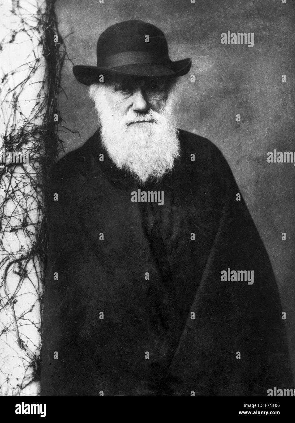 Photographic portrait of Charles Darwin (1809-1882) English naturalist and geologist. Photographed by Julia Margaret - Stock Image