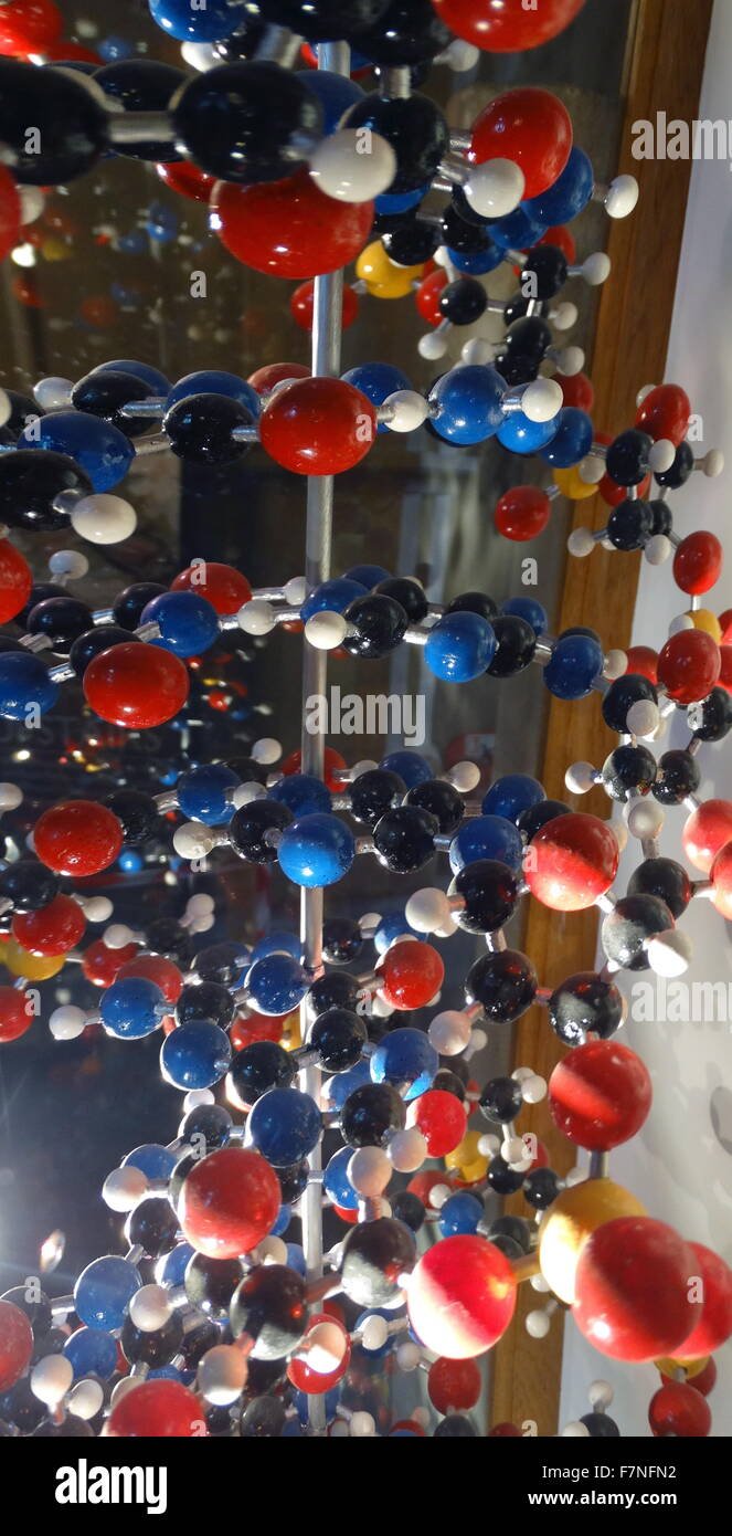 Model of Deoxyribonucleic Acid. The model shows the double helix structure of DNA; the molecule that carries genetic - Stock Image