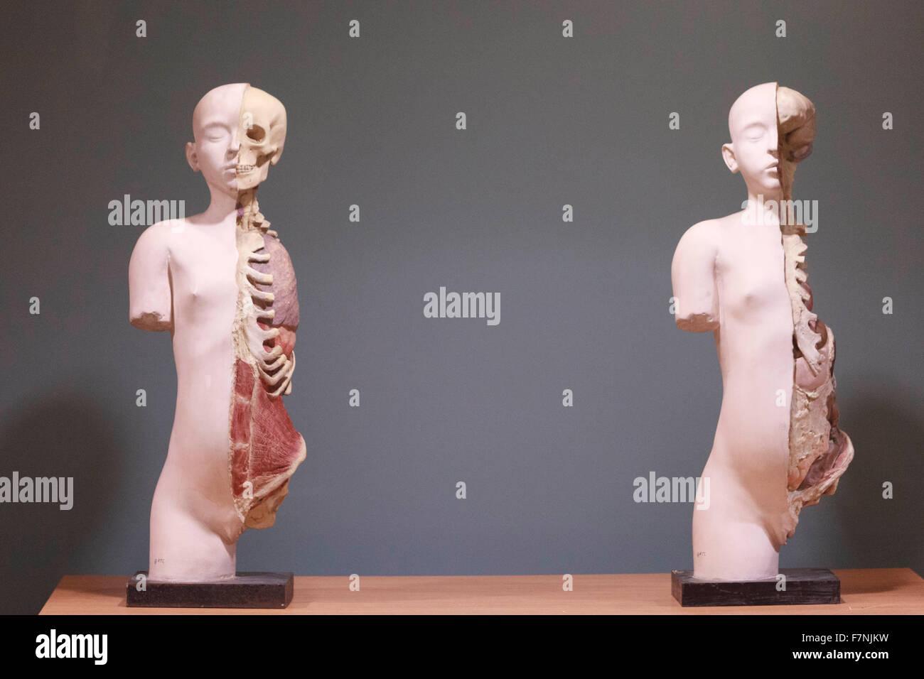 Edinburgh, UK. 2nd December. Anatomy exhibition highlights body's beauties inside and out. Edinburgh University - Stock Image