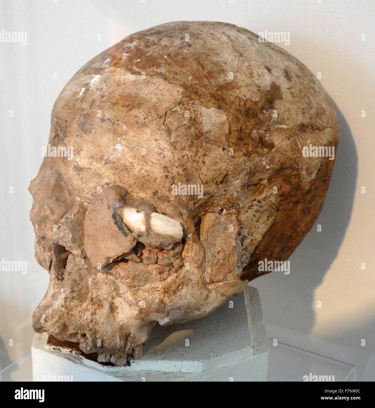 Skull moulded in plaster and pieces of shell inlaid, from Jericho, Pre-Pottery Neolithic B. Dated 6000 BC - Stock Image