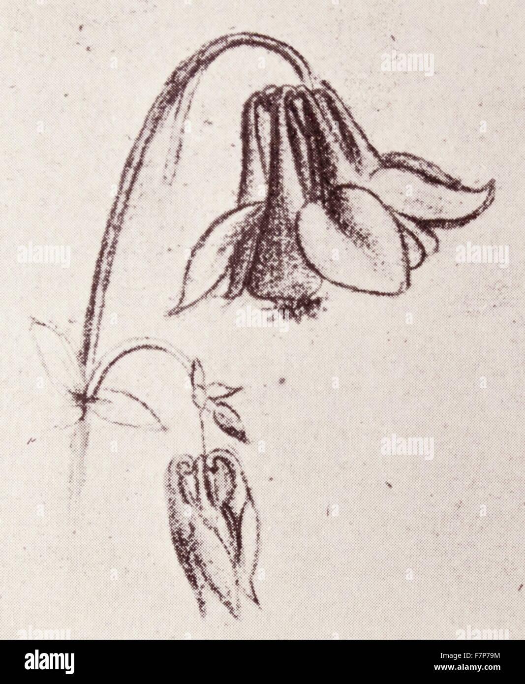 Columbine Flower by Leonardo da Vinci - Stock Image